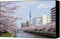 Cloud Glass Canvas Prints - Cherry Blossom Trees Along River, Tokyo. Canvas Print by I.Hirama