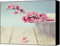 Pink Canvas Prints - Cherry Blossoms In Bowl Canvas Print by Hayley Johnson Photography