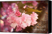 Cultivation Canvas Prints - Cherry Blossoms Kanzan Five Canvas Print by Susan Isakson
