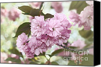 Cultivation Canvas Prints - Cherry Blossoms Kanzan Two Canvas Print by Susan Isakson