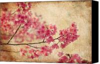 Antique Canvas Prints - Cherry Blossoms Canvas Print by Rich Leighton