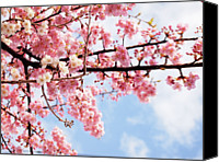 Pink Canvas Prints - Cherry Blossoms Under Blue Sky Canvas Print by Neconote