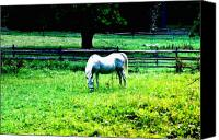 Chestnut Hill Canvas Prints - Chestnut Hill Horse Canvas Print by Bill Cannon