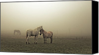 Horse Standing Canvas Prints - Chevaux Dans La Brume Canvas Print by 1suisse.ch