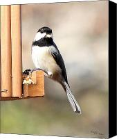 Signed Digital Art Canvas Prints - Chickadee Eating Nut 5779-II Canvas Print by Suzanne  McClain