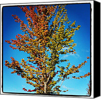 Bestoftheday Canvas Prints - Chill Is In The Air, And The #fall Canvas Print by Adam Romanowicz