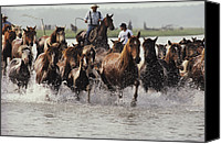 Chincoteague Canvas Prints - Chincoteague Cowboys Drive Their Wild Canvas Print by Medford Taylor