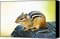 Log Canvas Prints - Chipmunk Canvas Print by Elena Elisseeva