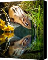 Photography Canvas Prints - Chipmunk Reflection Canvas Print by Bob Orsillo