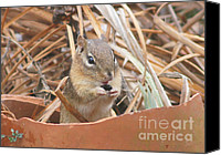 Chipmunk Picture Canvas Prints - Chipmunks are so Cute Canvas Print by Robert E Alter Reflections of Infinity LLC