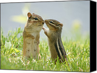 Two Animals Canvas Prints - Chipmunks In Grasses Canvas Print by Corinne Lamontagne
