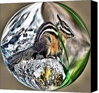 Chipmunk Picture Canvas Prints - Chipper Monk Canvas Print by Don Mann