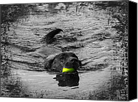 Water Retrieve Canvas Prints - Chocolate Lab Canvas Print by Ms Judi