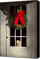 Clinton Photo Canvas Prints - Christmas - Clinton NJ - Christmas puppy Canvas Print by Mike Savad