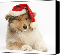 Father Christmas Canvas Prints - Christmas Collie Pup Canvas Print by Mark Taylor
