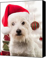 Santa Claus Canvas Prints - Christmas Elf Dog Canvas Print by Edward Fielding