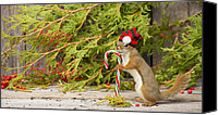 Cedar Canvas Prints - Christmas Squirrel. Canvas Print by Kelly Nelson
