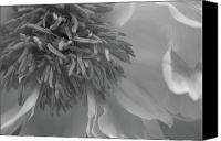 Photo Canvas Prints - Chrysanthemum Macro Black and White Canvas Print by Jose Valeriano