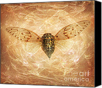Cicada Canvas Prints - Cicada in Amber Canvas Print by Janeen Wassink Searles