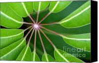 Green Leaves Canvas Prints - Circle Of Leaves Canvas Print by Dan Holm