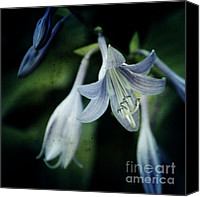 Flower Photography Canvas Prints - Cladis 02s Canvas Print by Variance Collections