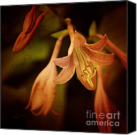 Flower Photography Canvas Prints - Cladis 03s Canvas Print by Variance Collections