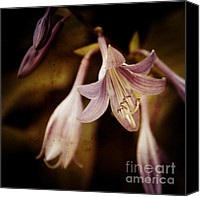 Flower Photography Canvas Prints - Cladis 04s Canvas Print by Variance Collections