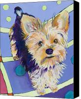 Terrier Canvas Prints - Claire Canvas Print by Pat Saunders-White