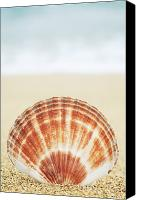 Brandon Tabiolo Canvas Prints - Clam Shell Canvas Print by Brandon Tabiolo - Printscapes