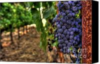 Blue Grapes Canvas Prints - Classic Cabernet Canvas Print by Mars Lasar