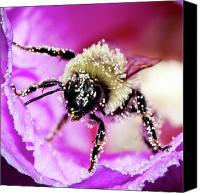 Bumblebees Canvas Prints - Clean Get Away Canvas Print by David Hahn