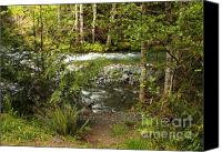 Mountain Stream Canvas Prints - Clear Mountain Stream Canvas Print by Carol Groenen