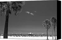 Palm Trees Canvas Prints - Clearwater Beach BW Canvas Print by Adam Romanowicz