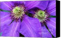 Vine Canvas Prints - Clematis Detail Canvas Print by Sandra Bronstein