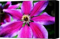Northwest Art Canvas Prints - Clematis Flower Canvas Print by Cathie Tyler