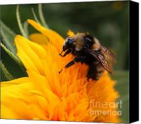 Teddybear Canvas Prints - Close-up Bee on Sunflower Canvas Print by Marjorie Imbeau