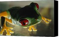 Red-eyed Frogs Canvas Prints - Close-up Of A Red-eyed Tree Frog Canvas Print by Paul Zahl