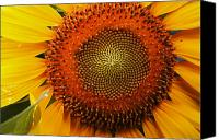 Ellicott Canvas Prints - Close Up Of A Sunflower Showing Canvas Print by George Grall