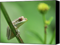 Tampa Canvas Prints - Close Up Of Frog Canvas Print by Lon Fong Martin