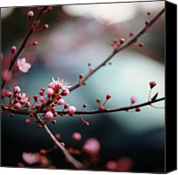 Pink Flower Branch Canvas Prints - Close-up Of Plum Blossoms Canvas Print by Danielle D. Hughson