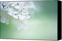 Flower Photo Canvas Prints - Close Up Of White Hydrangea Canvas Print by Elisabeth Schmitt