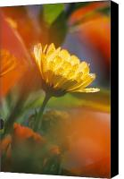 Selection Canvas Prints - Close-up Of Wildflower Canvas Print by Natural Selection Craig Tuttle