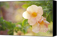 Flower Design Canvas Prints - Closeness Canvas Print by Jenny Rainbow