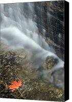 Maple Leafs Canvas Prints - Closeup Maple Leaf And Decew Falls, St Canvas Print by Darwin Wiggett