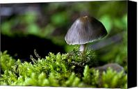 Cultivation Canvas Prints - Closeup Of Mushroom Canvas Print by John Short