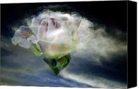 Bruster Canvas Prints - Cloud Rose Canvas Print by Clayton Bruster