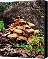 Mushroom Canvas Prints - Cluster Fungus Canvas Print by Christopher Holmes