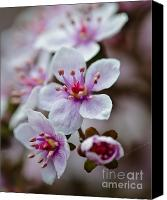 Royal Botanical Gardens Canvas Prints - Cluster of spring flowers.... Canvas Print by Christine Kapler