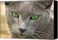 Pictures Of Cats Canvas Prints - Clyde and His Green Eyes Canvas Print by James Steele