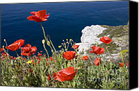 Greece Canvas Prints - Coastal Poppies Canvas Print by Richard Garvey-Williams